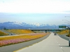 Highway Flowers - 168