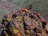 Lichen Paint