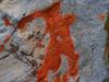 Orange Red study