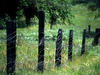 fence-and-grass