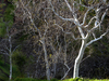 Tree Weave
